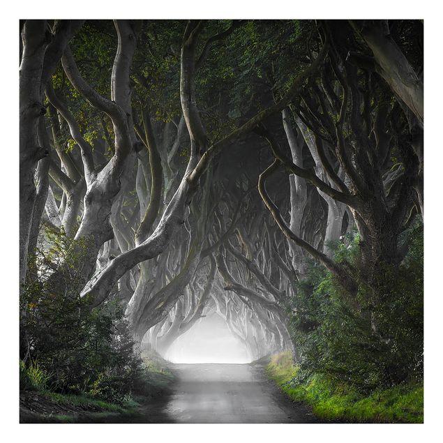 Beistelltisch - Wald in Nordirland