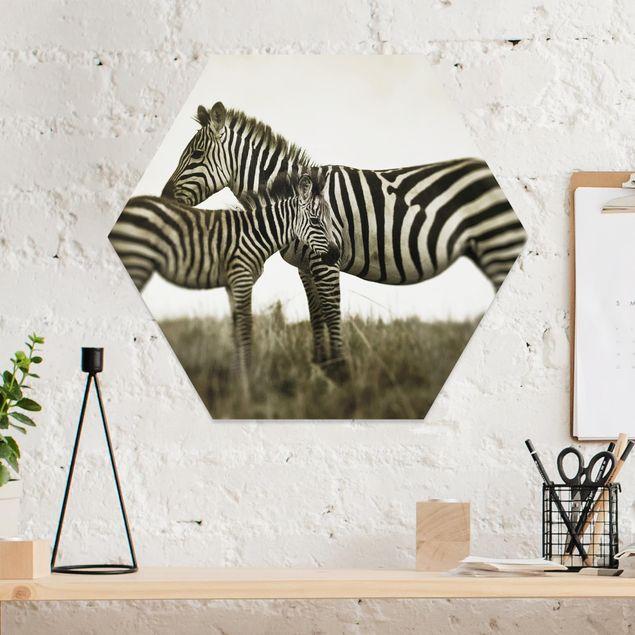 Hexagon Bild Forex - Zebrapaar