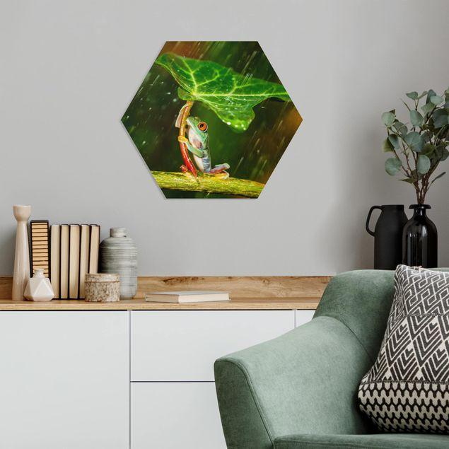 Hexagon Bild Forex - Ein Frosch im Regen