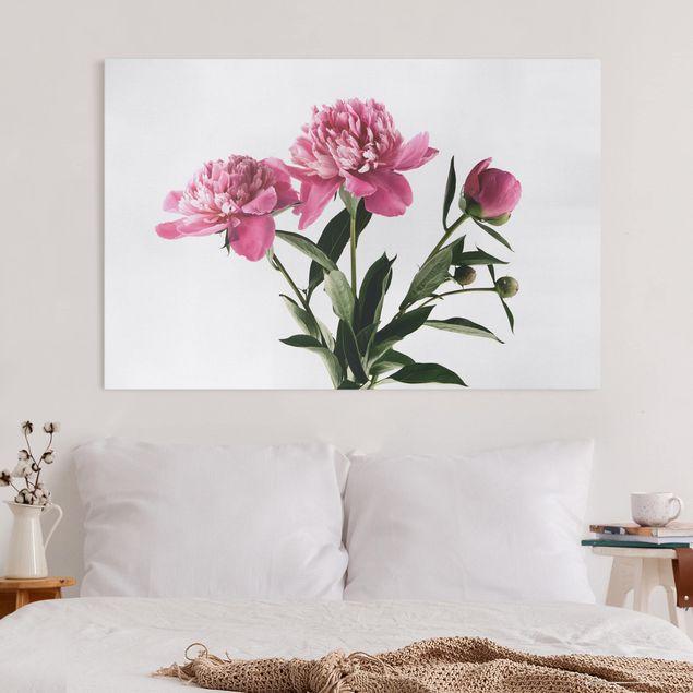 Leinwandbild - Blüten und Knospen Pink auf Weiß - Querformat 2:3
