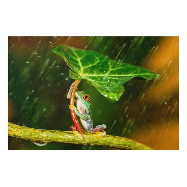 Forex Fine Art Print - Ein Frosch im Regen - Querformat 2:3