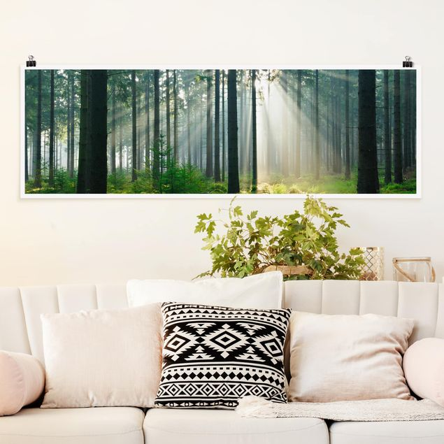 Poster - Enlightened Forest - Panorama Querformat