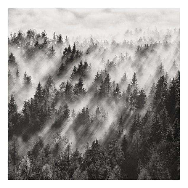 Forex Fine Art Print - Lichtstrahlen im Nadelwald - Quadrat 1:1