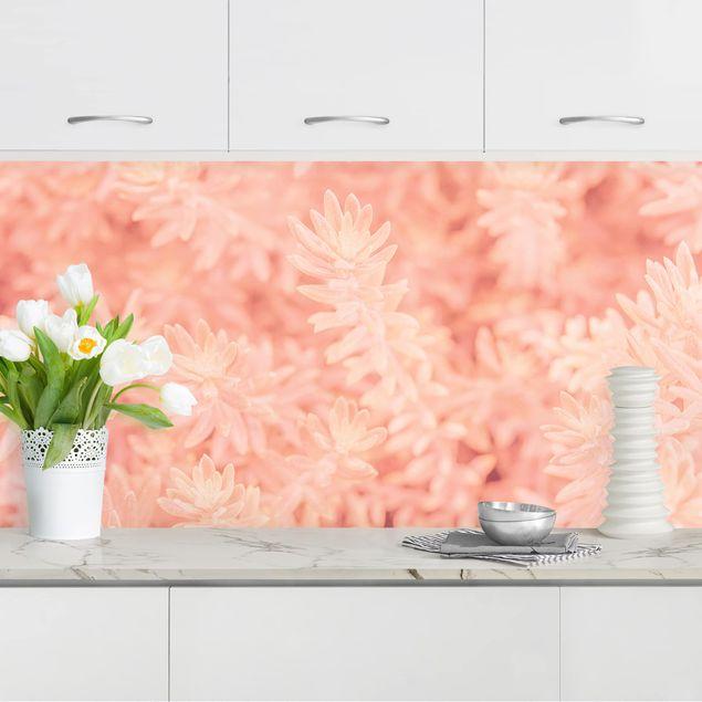Küchenrückwand - Rosmarin Rosa