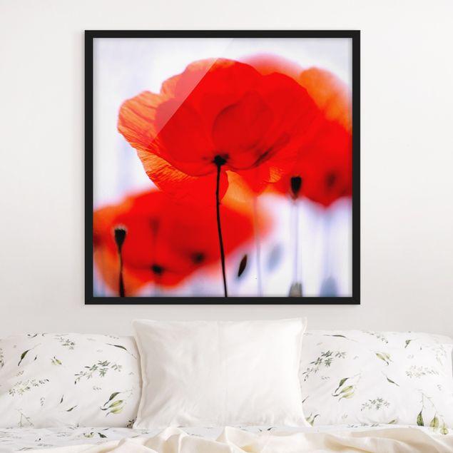 Bild mit Rahmen - Magic Poppies - Quadrat 1:1