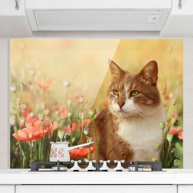 Glas Spritzschutz - Katze im Mohnfeld - Querformat - 4:3