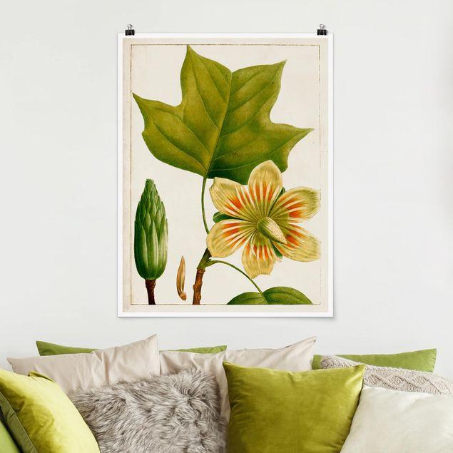 Poster - Tableau Blatt Blüte Frucht IV - Hochformat 3:4