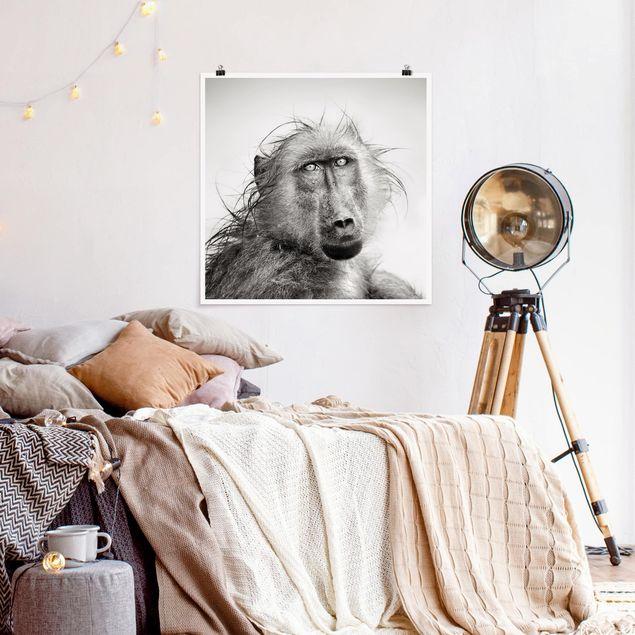 Poster - Crying Baboon - Quadrat 1:1