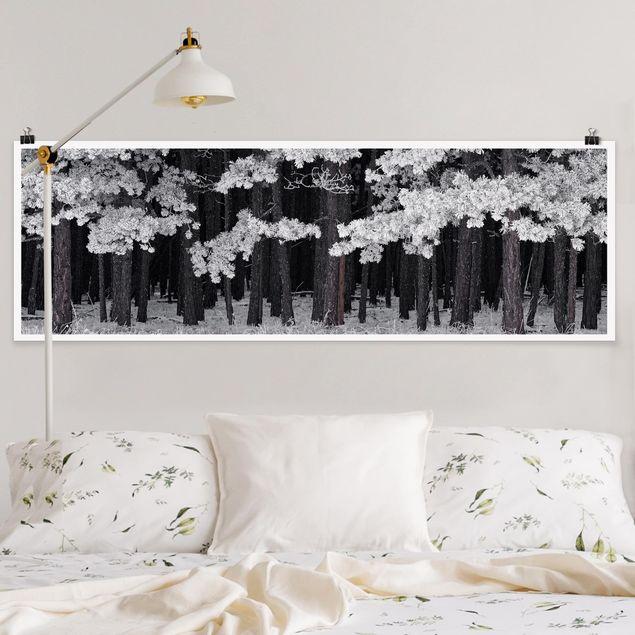 Poster - Wald mit Raureif in Österreich - Panorama Querformat