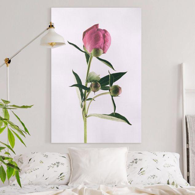 Leinwandbild - Pfingstrose Pink auf Weiß - Hochformat 3:2