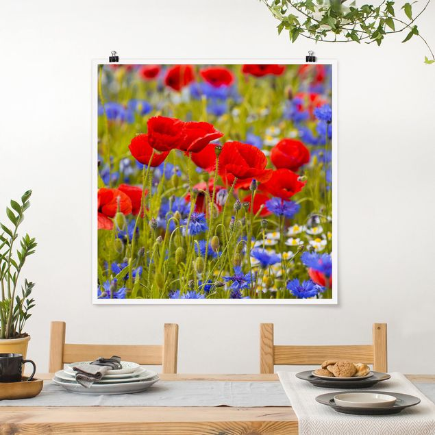 Poster - Sommerwiese mit Mohn und Kornblumen - Quadrat 1:1