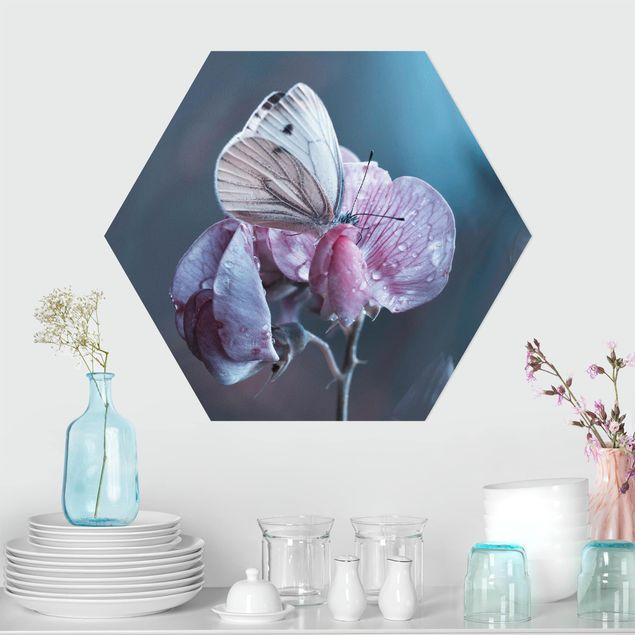 Hexagon Bild Forex - Schmetterling im Regen