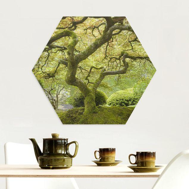 Hexagon Bild Alu-Dibond - Grüner Japanischer Garten