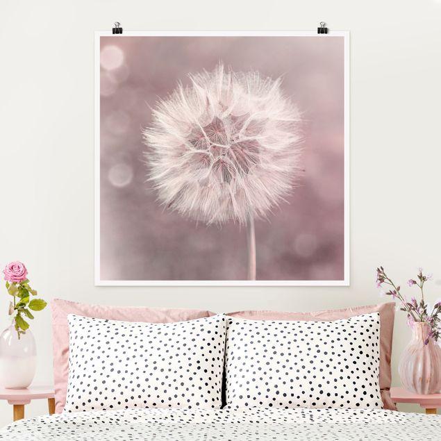 Poster - Pusteblume Bokeh rosa - Quadrat 1:1