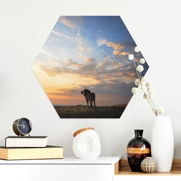 Hexagon Bild Alu-Dibond - Löwe im Sonnenuntergang