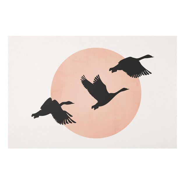 Forex Fine Art Print - Vögel vor rosa Sonne III - Querformat 2:3
