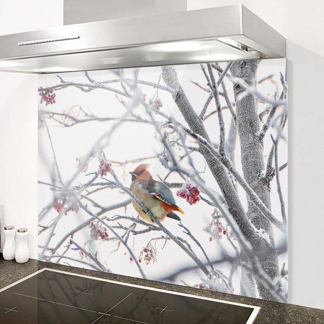 Glas Spritzschutz - Seidenschwanz im Baum - Querformat - 4:3