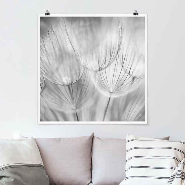 Poster - Pusteblumen Makroaufnahme in schwarz weiß - Quadrat 1:1