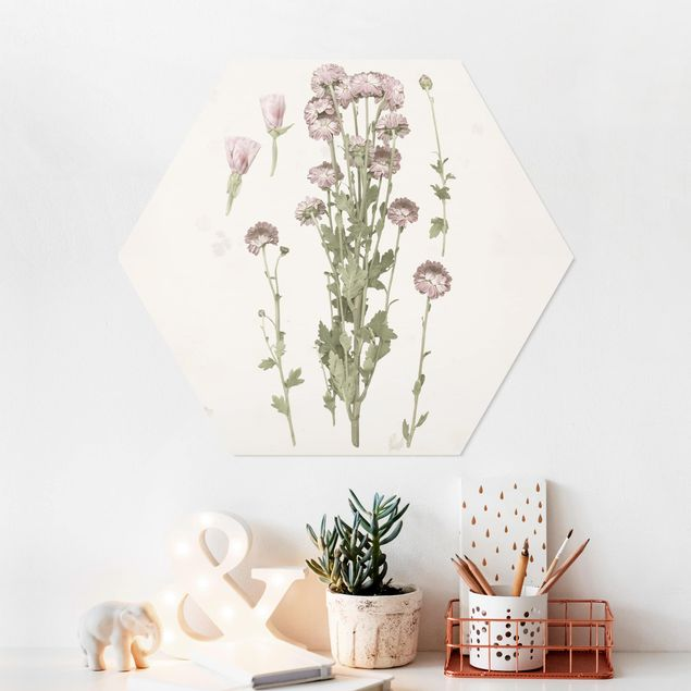 Hexagon Bild Forex - Herbarium in rosa I