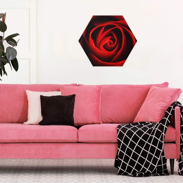 Hexagon Bild Alu-Dibond - Liebliche Rose