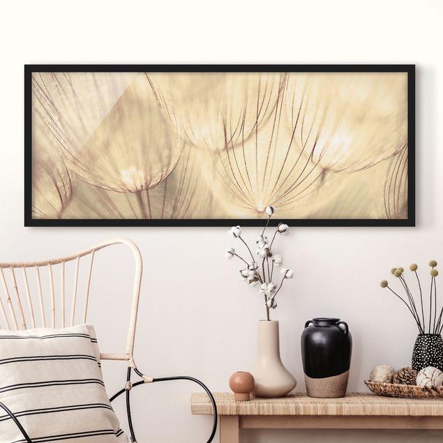 Bild mit Rahmen - Pusteblumen Nahaufnahme in wohnlicher Sepia Tönung - Panorama Querformat