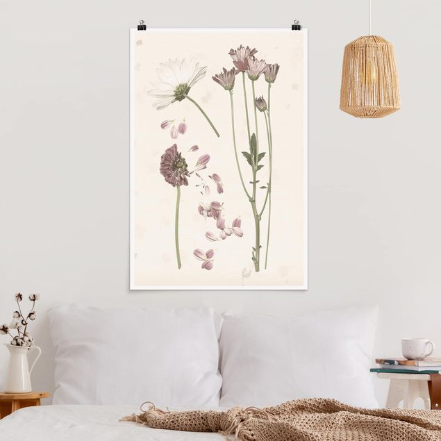 Poster - Herbarium in rosa II - Hochformat 3:2