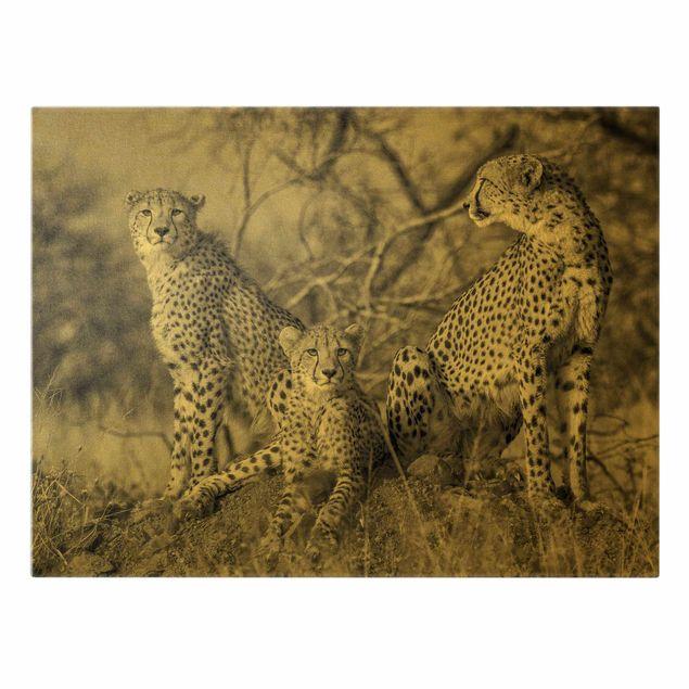 Leinwandbild Gold - Drei Geparden - Querformat 4:3