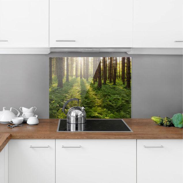 Glas Spritzschutz - Sonnenstrahlen in grünem Wald - Querformat - 4:3