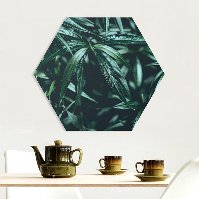 Hexagon Bild Forex - Tropische Pflanzen III