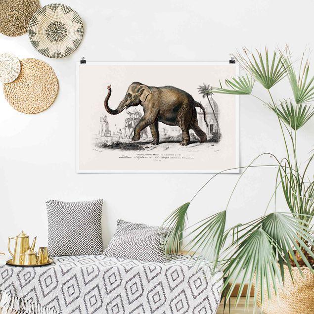 Poster - Vintage Lehrtafel Elefant - Querformat 2:3