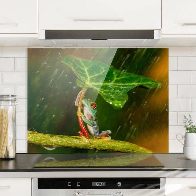 Glas Spritzschutz - Ein Frosch im Regen - Querformat - 4:3
