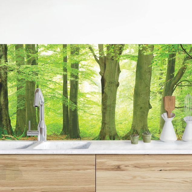 Küchenrückwand - Mighty Beech Trees