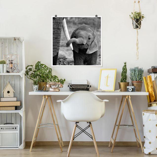 Poster - Elefantenbaby - Quadrat 1:1
