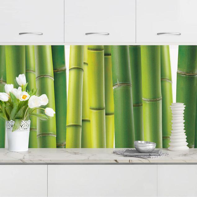 Küchenrückwand - Bambuspflanzen II