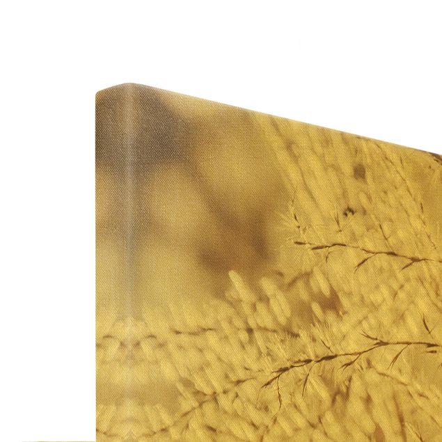Leinwandbild Gold - Pampasgras Close Up - Querformat 3:2
