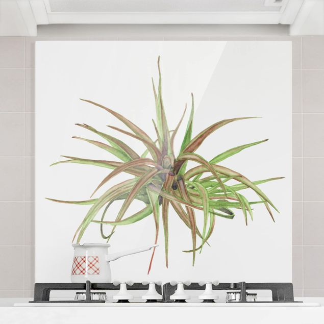 Glas Spritzschutz - Luftpflanze Aquarell II - Quadrat - 1:1