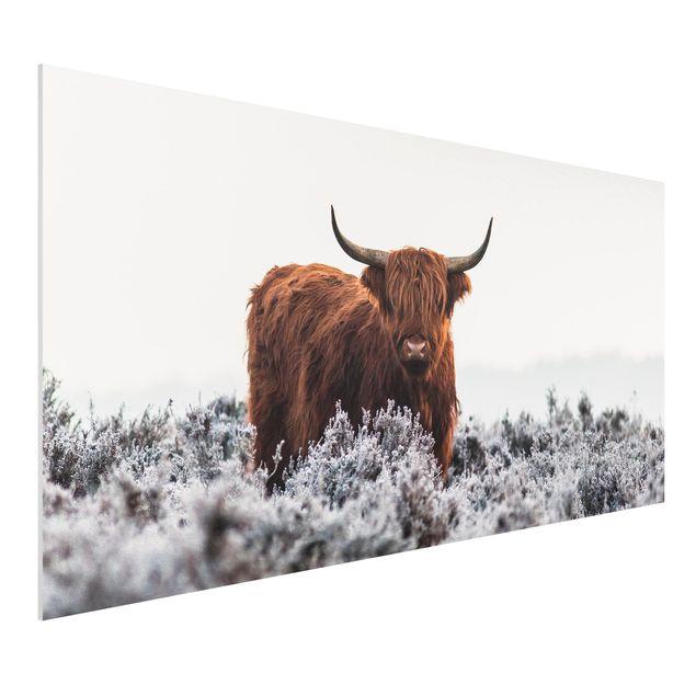 Forex Fine Art Print - Bison in den Highlands - Querformat 1:2