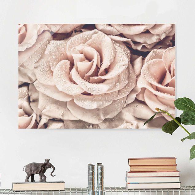 Glasbild - Rosen Sepia mit Wassertropfen - Querformat 2:3