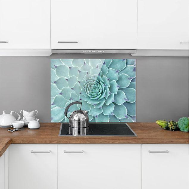 Glas Spritzschutz - Kaktus Agave - Querformat - 4:3