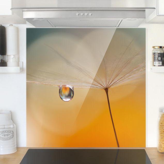 Glas Spritzschutz - Pusteblume in Orange - Quadrat - 1:1