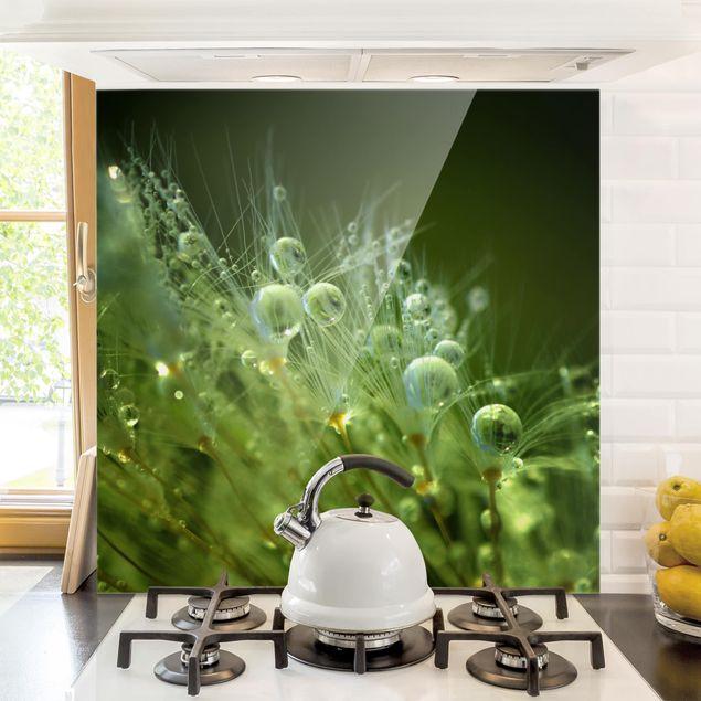 Glas Spritzschutz - Grüne Samen im Regen - Quadrat - 1:1