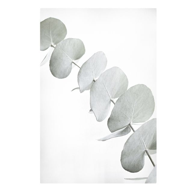 Leinwandbild - Eukalyptuszweig im Weißen Licht - Hochformat 2:3