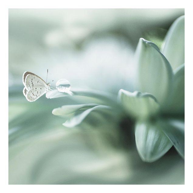 Forex Fine Art Print - Schmetterling und Tautropfen in Pastellgrün - Quadrat 1:1