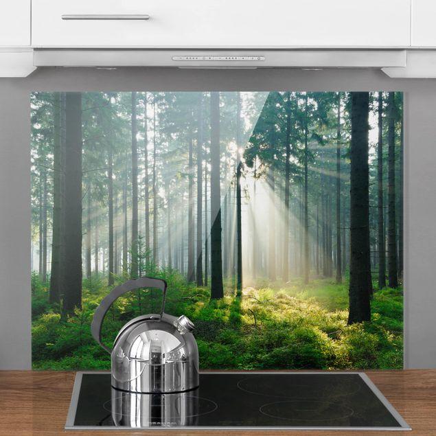 Glas Spritzschutz - Enlightened Forest - Querformat - 4:3