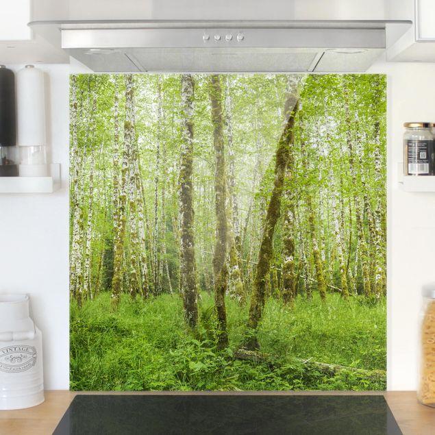 Glas Spritzschutz - Hoh Rainforest Olympic National Park - Quadrat - 1:1