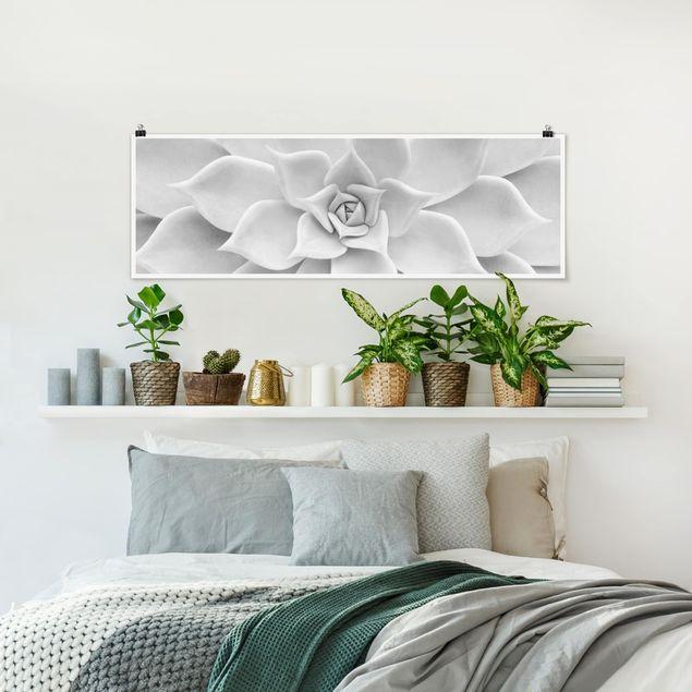Poster - Kaktus Sukkulente - Panorama Querformat
