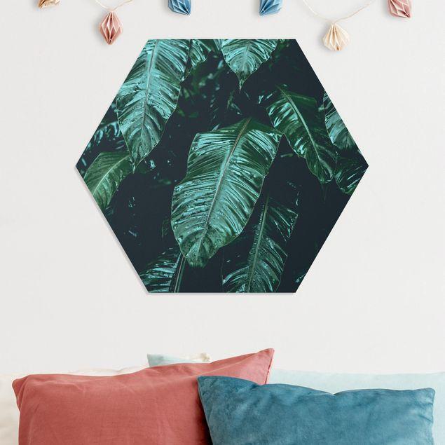 Hexagon Bild Forex - Tropische Pflanzen II