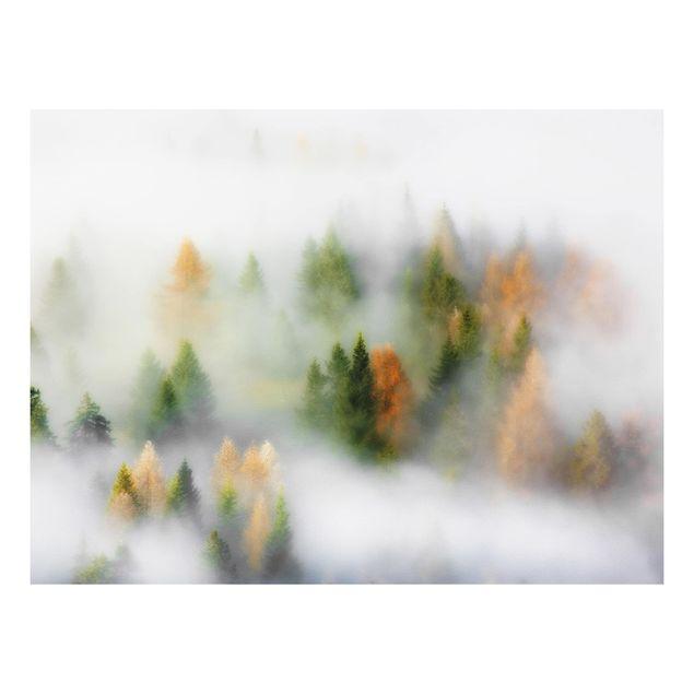 Forex Fine Art Print - Nebelwald im Herbst - Querformat 3:4