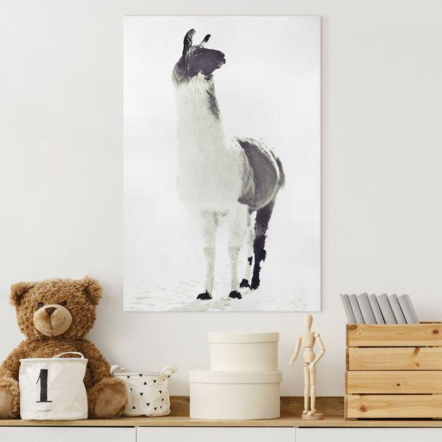 Leinwandbild - Fluffiges Lama - Hochformat 2:3