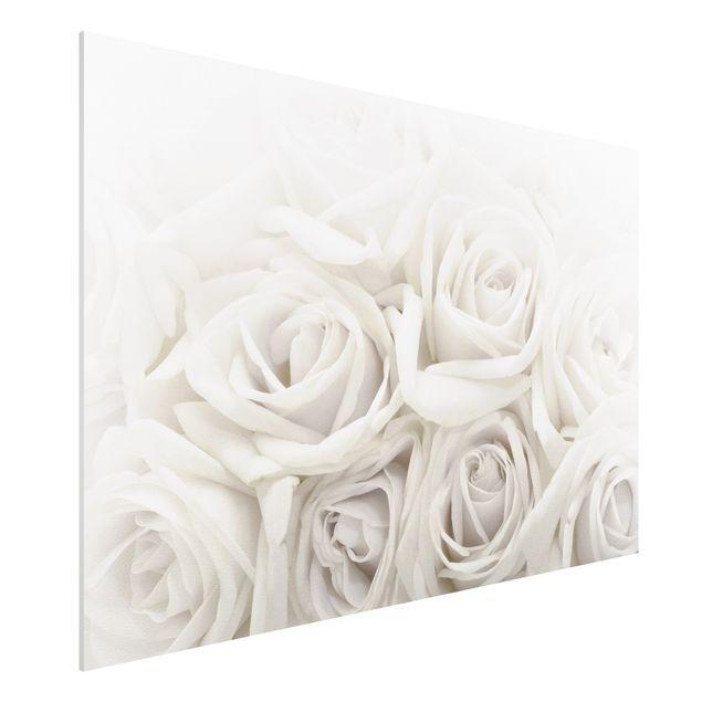 Forexbild - Weiße Rosen